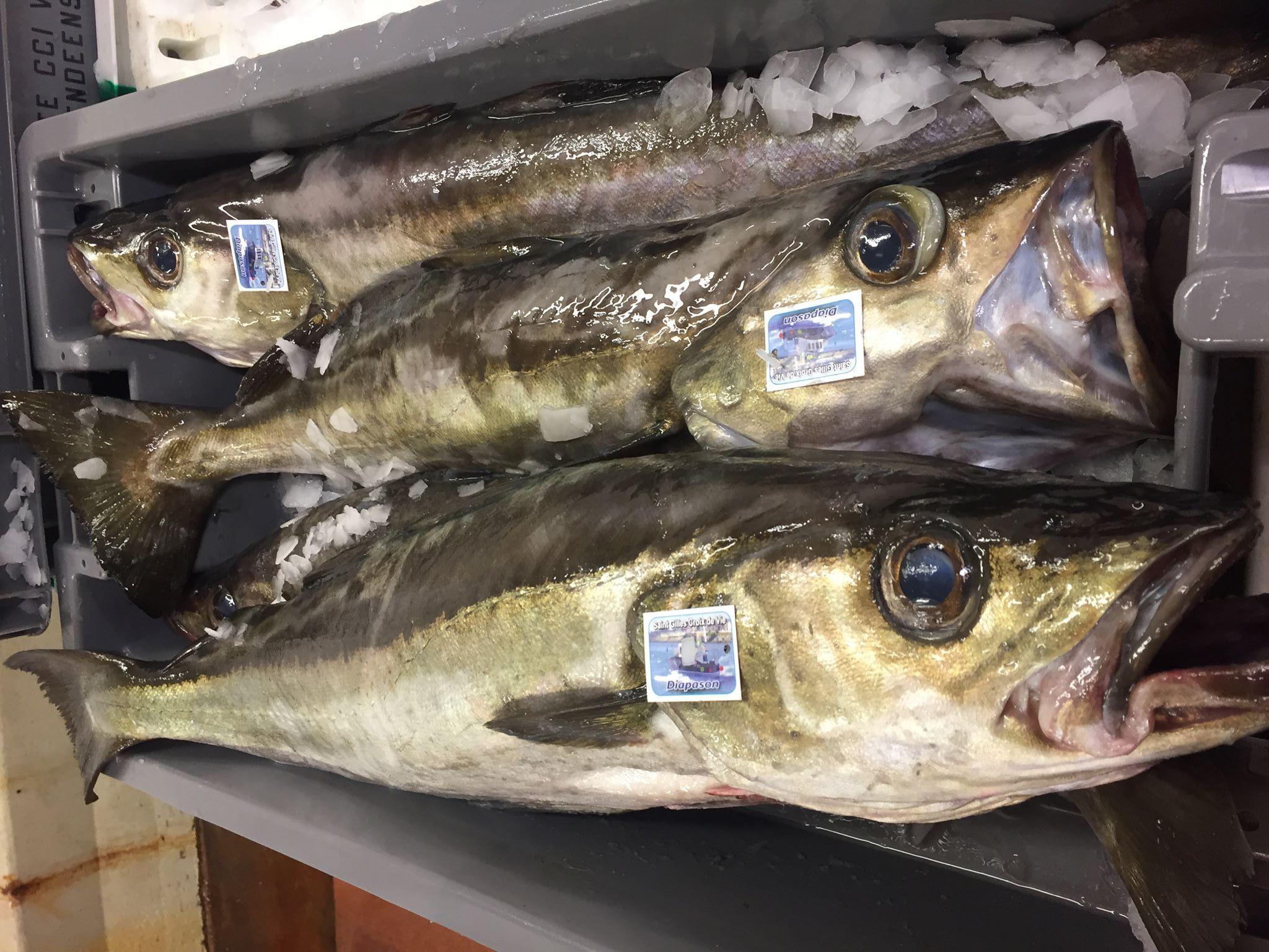 Caisse de poisson par Mareyage Hennequin côte Vendéenne 85