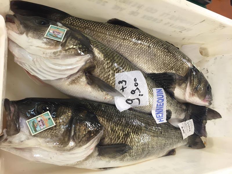 poissons Mareyage Hennequin - commerçant des produits de la mer sur la côte atlantique