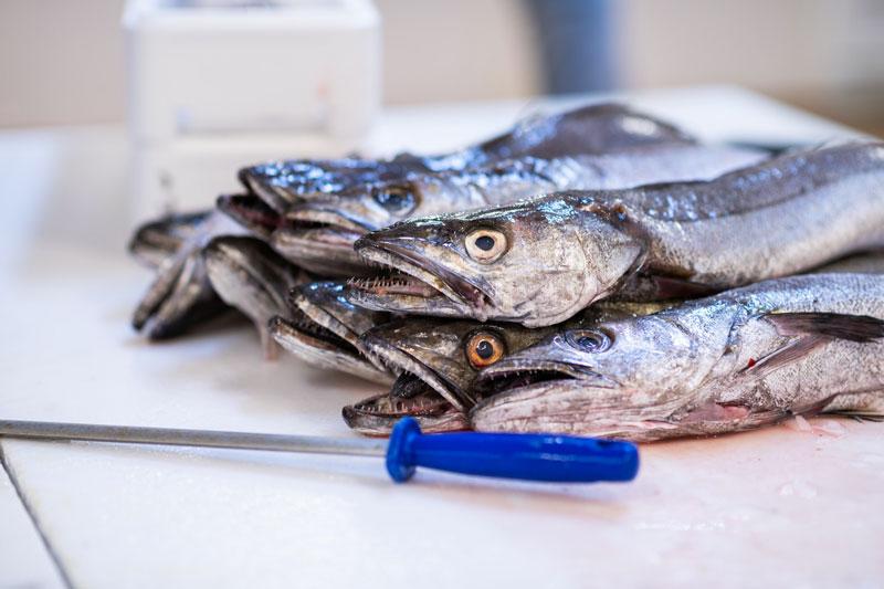 Merlu decoupe Mareyage Hennequin - commerçant des produits de la mer sur la côte atlantique