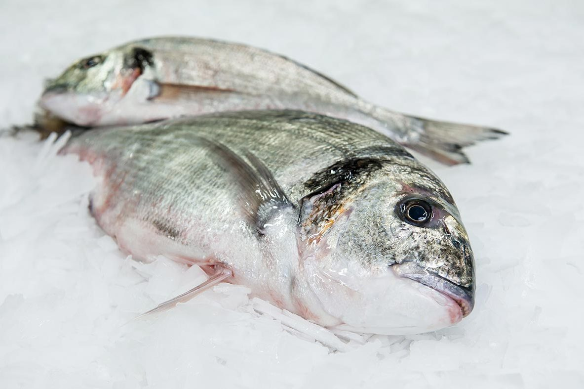 dorade royale entier cru Mareyage Hennequin pêche artisanale en mer sur la côte atlantique