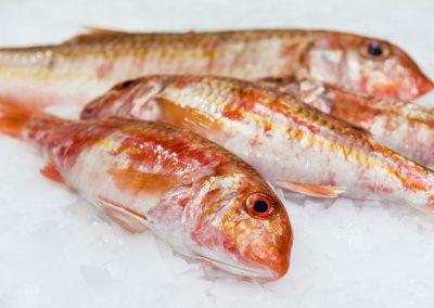 rouget barbet entier cru Mareyage Hennequin - commerçant des produits de la mer sur la côte atlantique