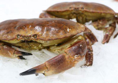 tourteaux cru Mareyage Hennequin - commerçant des produits de la mer sur la côte atlantique