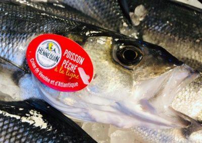 Poisson pêché par Mareyage Hennequin, criée de Vendée et d'Atlantique, Les Sables d'Olonne, Ile d'Yeu, La Rochelle